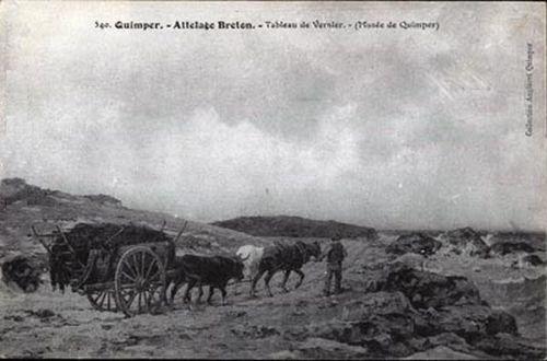 Quimper - Attelage Breton